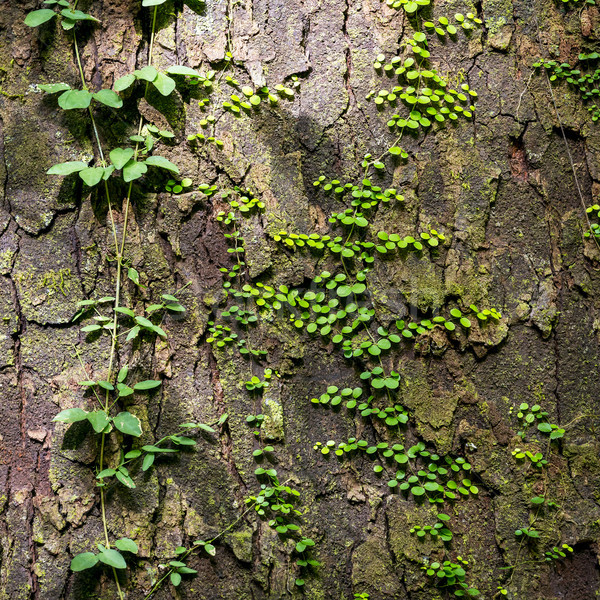 Green Vines As Natural Background Stock photo © THP