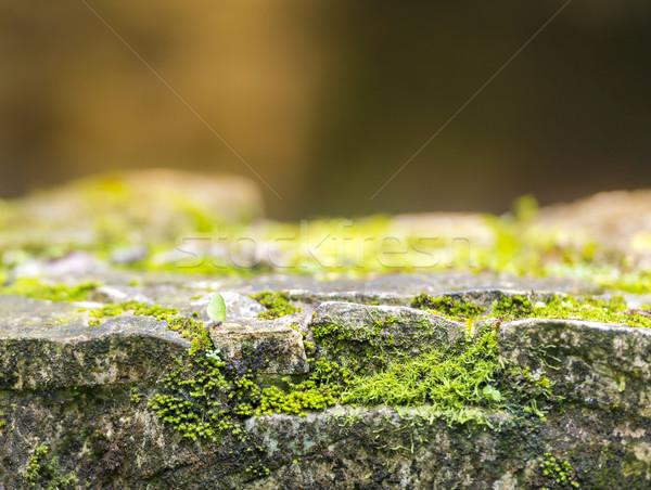 Karınca yeşil yosun kaya duvar eski Stok fotoğraf © THP