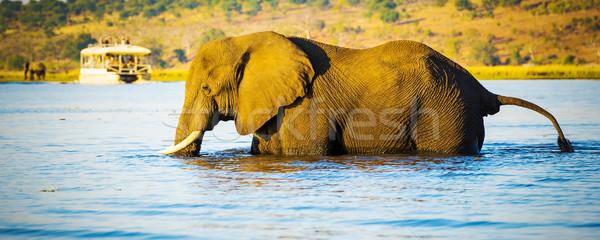Fil safari Afrika izlerken Botsvana Stok fotoğraf © THP
