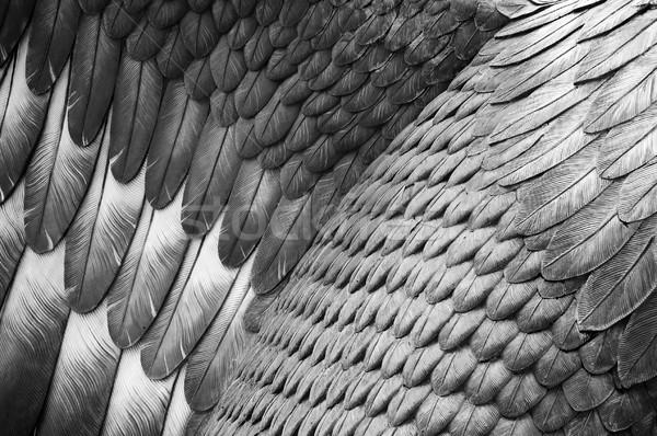 орел подробность птица Перу Сток-фото © THP