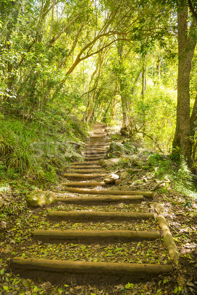 Walking Trail Stairway on Table Mountain Stock photo © THP