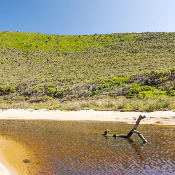 Yarımada güney avustralya derin dere koruma park Stok fotoğraf © THP