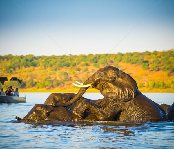 Elephants Swimming Stock photo © THP