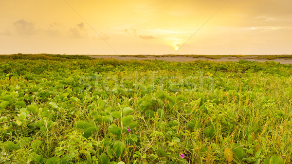 Playa Linda Landscape Mexico Stock photo © THP