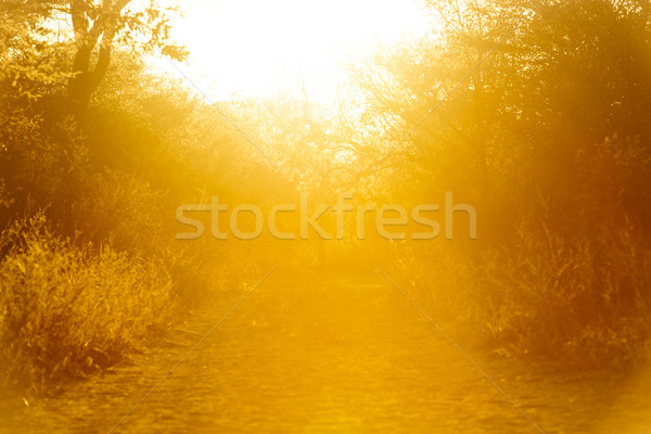 Sunset Background Stock photo © THP
