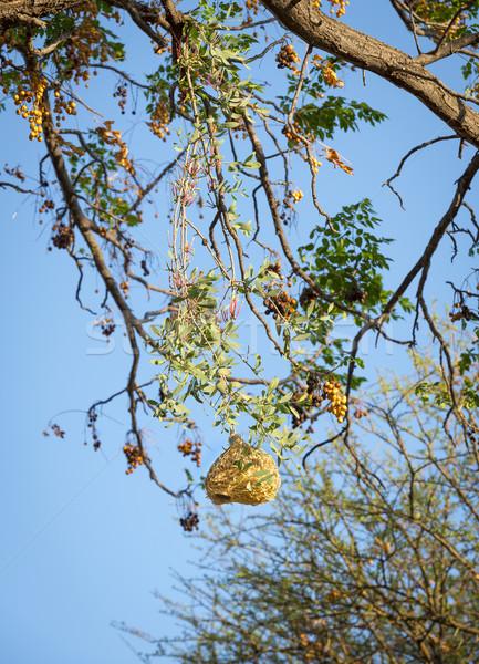Kuş şaşırtıcı ağaçlar Botsvana Afrika manzara Stok fotoğraf © THP