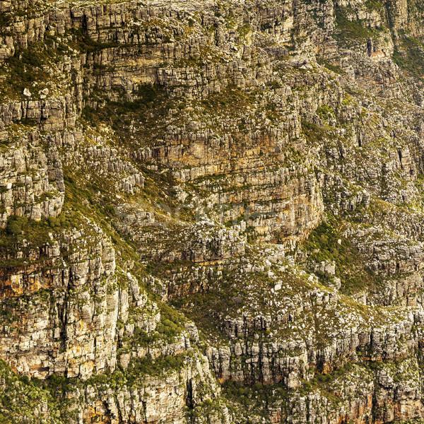 Foto stock: Doze · pormenor · ver · Cidade · do · Cabo · África · do · Sul · natureza