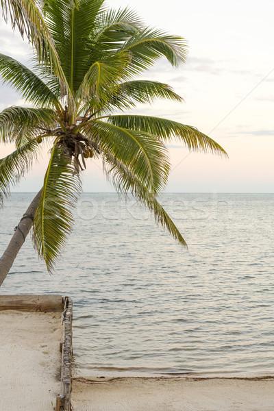 Palm Tree On Tropical Beach Stock photo © THP
