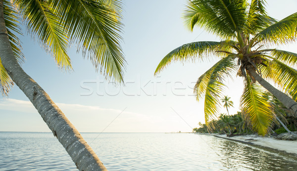 Caribbean Beach Belize Stock photo © THP