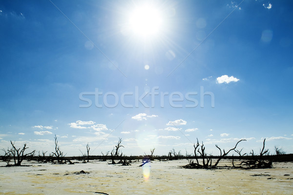 Mudança climática dead tree branco sal Foto stock © THP