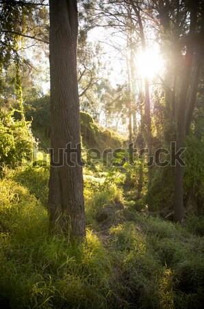 Fantasy Forest Stock photo © THP