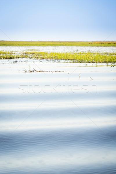Chobe River Stock photo © THP
