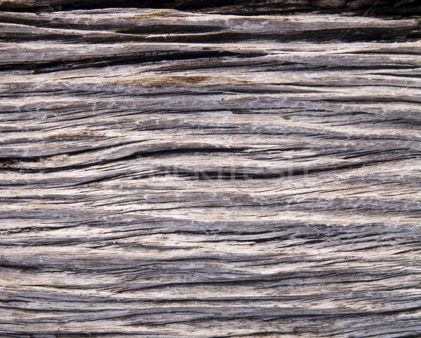 Drift Wood Stock photo © THP