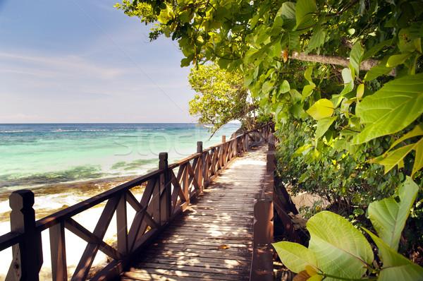 тропические красивой деревья Тропический остров небе воды Сток-фото © THP