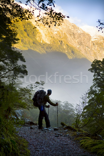 Elképesztő kirándulás természetjáró felemelkedik erdő fák Stock fotó © THP