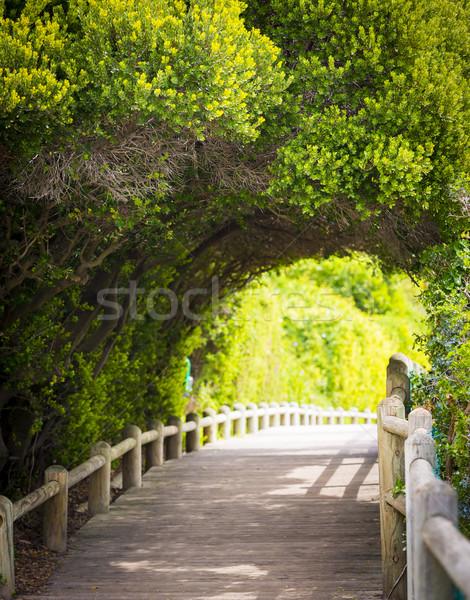 Nature Boardwalk Stock photo © THP