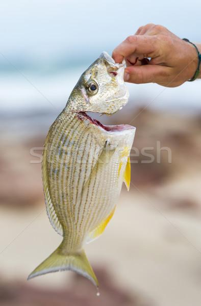 Catching Fresh Fish Stock photo © THP