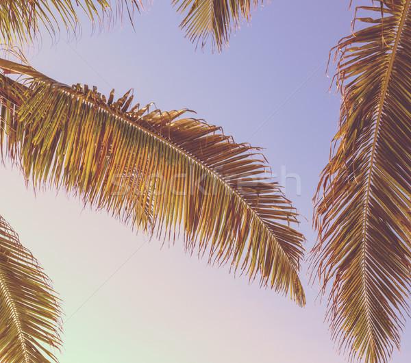 Retro Tropical Palm Tree Background Stock photo © THP