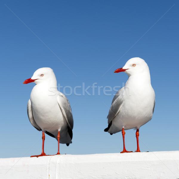 Stock photo: Seagulls