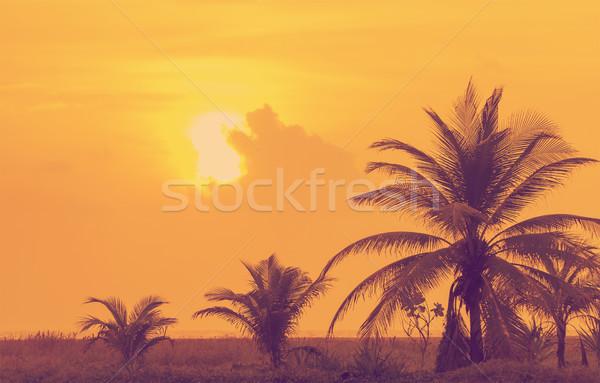Vintage Sunset Mexico Stock photo © THP