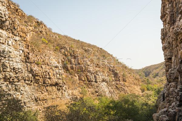 Dögkeselyű Botswana Afrika vidéki otthon Stock fotó © THP