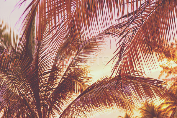 Retro Sunset On Palm Trees Stock photo © THP
