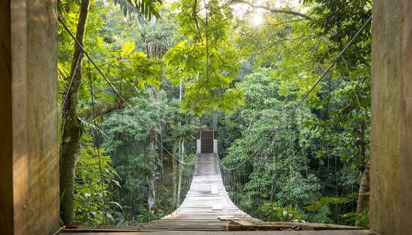 Jungle Bridge Solitude Scene Stock photo © THP