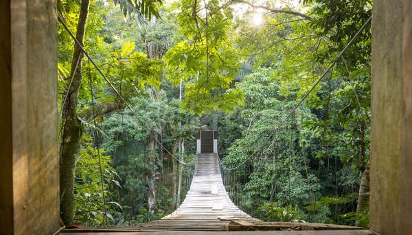 Orman köprü yalnızlık sahne kaçış asılı Stok fotoğraf © THP