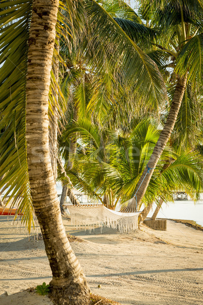 Tropical Beach Hammock Stock photo © THP