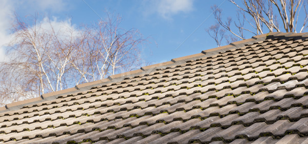 Old Roof Tiles Stock photo © THP
