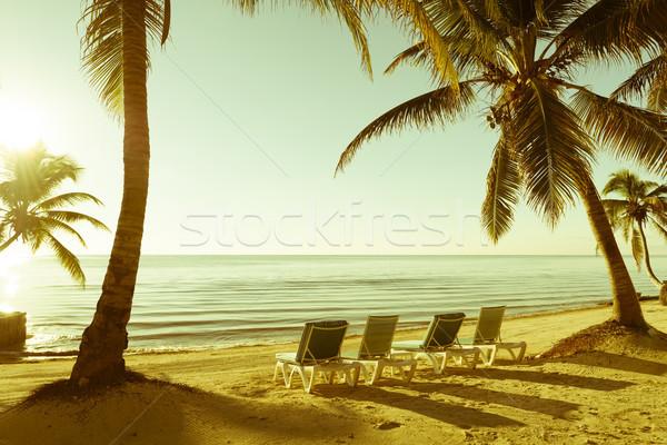 Stockfoto: Tropisch · strand · retro · palmbomen · hemel · achtergrond · bomen