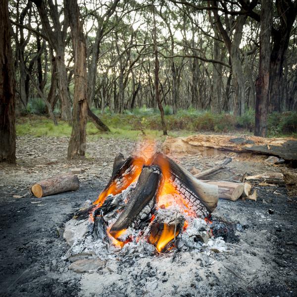 Kampvuur bos brandend heldere schemering hout Stockfoto © THP