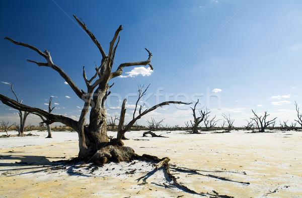 Klímaváltozás kidőlt fa alsónadrágok végtagok fehér só Stock fotó © THP
