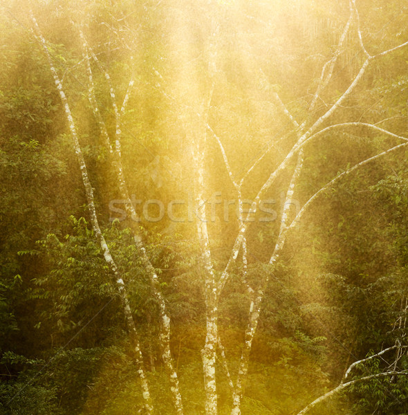 Tranquil Forest Tree Background Stock photo © THP
