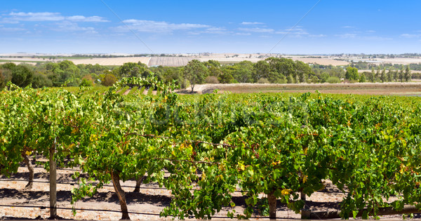 Barossa Valley Stock photo © THP