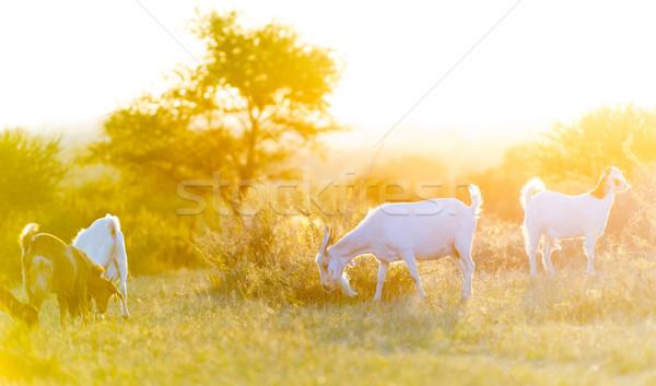Pôr do sol belo luz para baixo campo Foto stock © THP