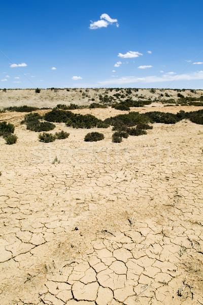 Zmiany klimatyczne ciepła ziemi pęknięty rozwój Zdjęcia stock © THP