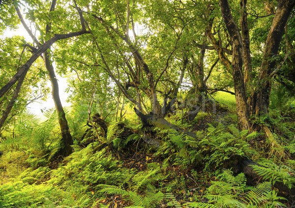 Afryki dżungli krajobraz wibrujący zielone paprocie Zdjęcia stock © THP