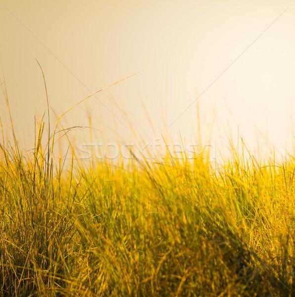 трава африканских саванна мелкий Focus закат Сток-фото © THP