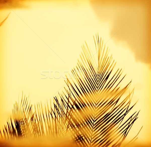 Sunset Palm Fronds Stock photo © THP