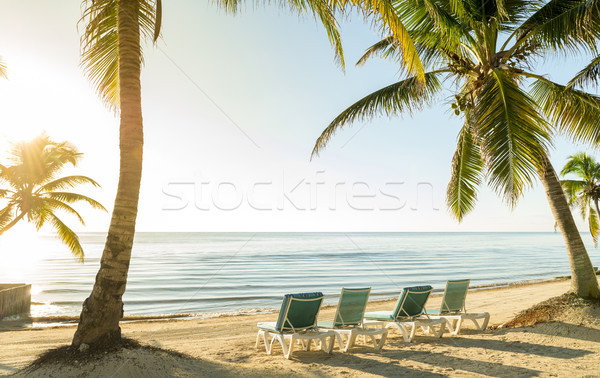 Beach Vacation With Palmtrees And Deckchairs Stock photo © THP