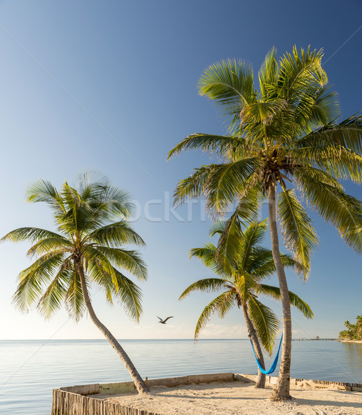 Tropical Island Beach With Hammock Stock photo © THP