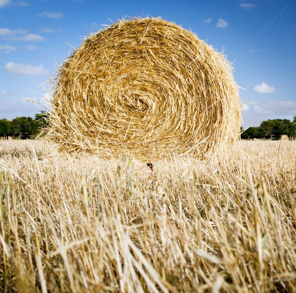 Feno campos verão tempo colheita céu Foto stock © THP