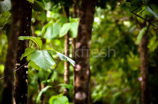 лес листьев подробность богатых зеленый расплывчатый Сток-фото © THP