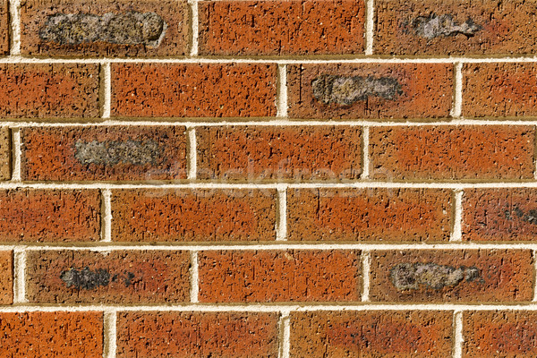 Red Brick Wall Stock photo © THP