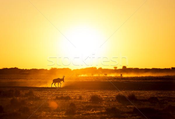 Afryki wygaśnięcia krajobraz spaceru zakurzony ziemi Zdjęcia stock © THP