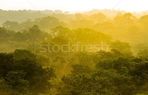 Dzsungel naplemente arany fény Mexikó Stock fotó © THP