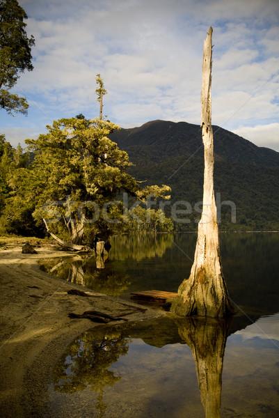 Foto stock: Selva · lago · floresta · reflexões · borda · árvores