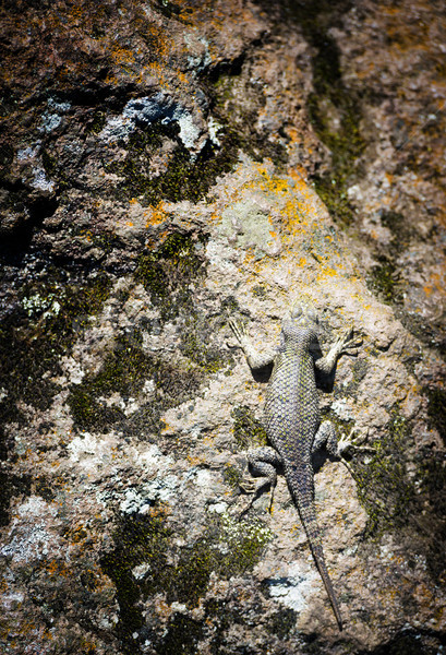 Brown Spiny Lizard Stock photo © THP