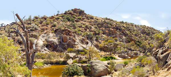 Australian Outback Oasis Stock photo © THP